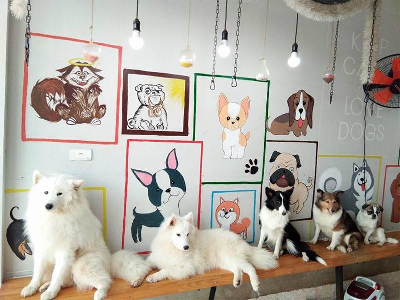 Ý tưởng trang trí quán cafe chó, mèo